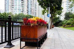 Large wooden flower bed with colorful flowers. Pedestrian stone walkway, steel black fence next to the road. Pedestrian road in the park of rest Guangzhou royalty free stock photos