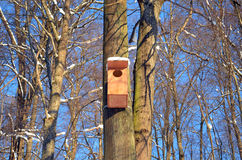 Large wooden nesting-box hanging on tree blue sky Stock Photo