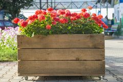Large wooden pot with flower in outdoor. Large wooden pot with flowers.  royalty free stock photos