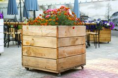 Large wooden pot with flower in outdoor. Large wooden pot with flowers.  royalty free stock photography