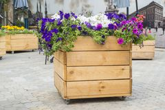 Large wooden pot with flower in outdoor. Large wooden pot with flowers.  stock images