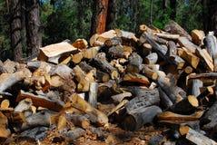 The Large Woodpile Royalty Free Stock Image