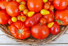 Large basket of tomatoes. Large woven basket filled with a variety of yellow, red and orange tomatoes with stems on a wooden table top Stock Photo