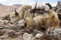 Large yak transport. S large sack through the Himalayas, Nepal Royalty Free Stock Photography