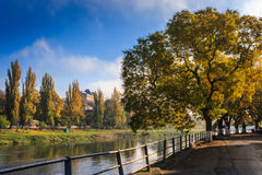 Large yellow autumn crowns at the edge of embankment Royalty Free Stock Images