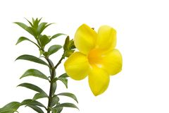 Large yellow flower Stock Photography
