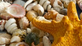 Different mixed colorful seashells as background. Various corals, marine mollusk and scallop shells. Large Yellow Seastar and close up lots of different mixed stock video footage