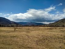 A large yellow spring field in the mountains of the Altai stock image