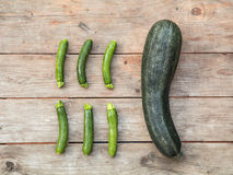 The large zucchini. Six normal size zucchini and a very large one Stock Photos