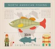 Largemouth Baarzen stock illustratie