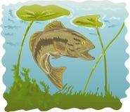 Largemouth baarzen met waterlelies stock illustratie