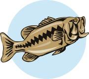 Largemouth Bass Royalty Free Stock Photography