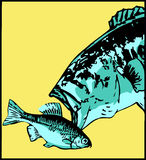 Largemouth bass attacks little fish - vector Stock Images