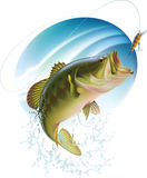 Largemouth bass catching a bite. Largemouth bass is catching a bite and jumping in water spray. Layered vector illustration Royalty Free Stock Image