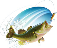 Largemouth bass catching a bite. Largemouth bass is catching a bite and jumping in water spray. Layered  illustration Stock Image