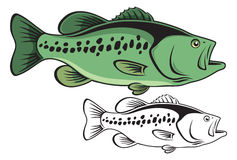 Largemouth bass Royalty Free Stock Photography