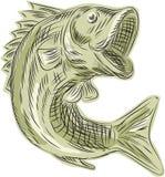 Largemouth Bass Fish Etching Royalty Free Stock Photos