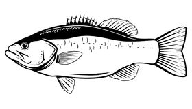 Largemouth Bass Fish. In side view in black and white color, isolated Royalty Free Stock Photos