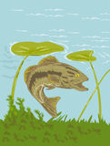 Largemouth bass fish underwater. Illustration of a largemouth bass fish swimming underwater with sea weeds and water lily Royalty Free Stock Image