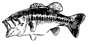 Largemouth bass fish  - vector Stock Photos