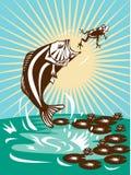 Largemouth Bass Fishing Royalty Free Stock Photography