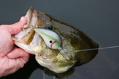 Largemouth Bass Fishing Crankbait Lure Royalty Free Stock Photos