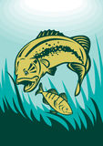 Largemouth bass and perch fish Stock Photo