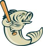 Largemouth bass player baseball. Cartoon illustration of a largemouth bass fish playing baseball batting isolated on white Stock Image