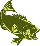 Largemouth Bass  woodcut Royalty Free Stock Image