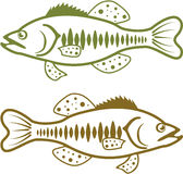 Largemouth Basvector Stock Afbeelding