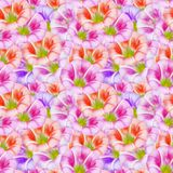 Larger bindweed. Seamless pattern texture of flowers. Floral bac Royalty Free Stock Images