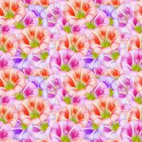 Larger bindweed. Seamless pattern texture of flowers. Floral bac. Larger bindweed. Texture of flowers. Seamless pattern for continuous replicate. Floral Royalty Free Stock Image