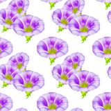 Larger bindweed. Seamless pattern texture of flowers. Floral   Royalty Free Stock Photography