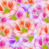 Larger bindweed. Seamless pattern texture of flowers. Floral   Stock Photo