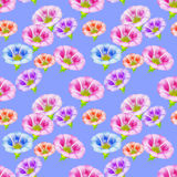 Larger bindweed. Seamless pattern texture of flowers. Floral   Stock Photography