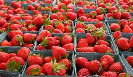 Larger DOF horizontal strawberries Stock Photos