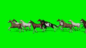 Larger group horses running past - green screen