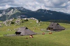 The largest Alpine settlement of shepherds in Europe. Slovenia stock photo