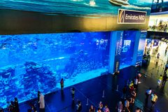 Largest aquarium of the world in Dubai Mall. DUBAI, UAE - NOVEMBER 14: Aquarium in Dubai Mall - world's largest shopping mall , Downtown Burj Dubai November 14 Royalty Free Stock Image