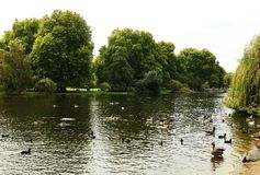 Ducks on the Serpentine Lake in Hyde Park, London. It is the largest of four Royal Parks that form a chain from the entrance of Kensington Palace through Royalty Free Stock Photo