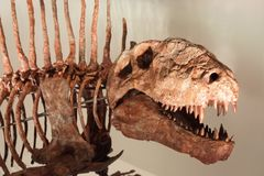 Largest prehistoric dinosaur with huge serrated teeth Royalty Free Stock Photos