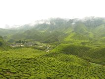 Largest Tea Garden -Cameron Highland royalty free stock images