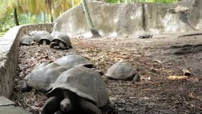 Largest tortoises in the world Royalty Free Stock Images