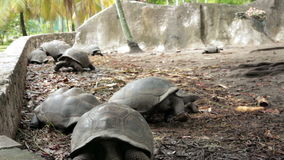 Largest tortoises in the world Royalty Free Stock Photos