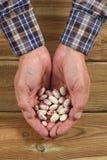 Largeur caucasienne de main du ` s d'homme complètement des haricots frais photographie stock libre de droits