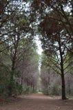 largo camino en bosque nublado embotado Imágenes de archivo libres de regalías