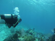 Largo chave do mergulho Foto de Stock Royalty Free