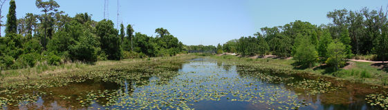 Largo, Florida Landscape. Panoramic view of swamp and canal, Largo, Florida royalty free stock photo