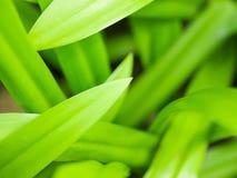 largo-hojas de la Verde-hierba Imagen de archivo