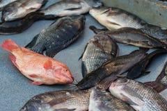 Largo varios pescados muertos de las horas Foto de archivo